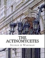 The Actinomycetes