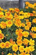 Marigolds Notebook