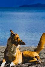 Happy Dog at the Lake