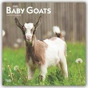 Baby Goats 2020 Square Wall Calendar