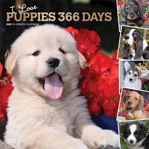 Puppies, I Love, 366 Days, 2020 Square Wall Calendar