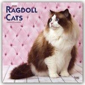 Ragdoll Cats 2020 Square Wall Calendar