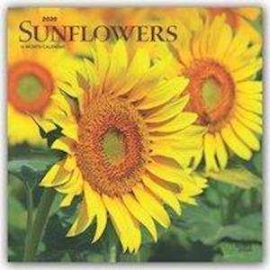 Sunflowers 2020 Square Wall Calendar