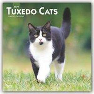Tuxedo Cats 2020 Square