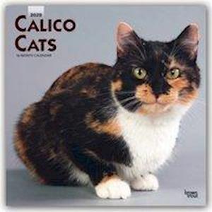 Calico Cats 2020 Square Wall Calendar