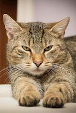 Where Is My Dinner? Tabby Cat Journal