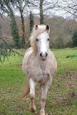 Lovely Red Speckled White Horse in a Pasture Journal