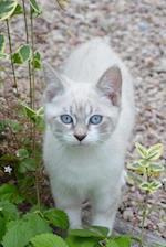 Pretty Blue-Eyed Kitty Cat Journal