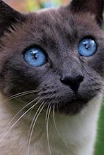 Beautiful Siamese Cat Pet Portrait Journal