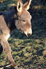 Such a Precious Baby Donkey Journal