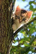 Curious Little Kitten Up in a Tree Journal