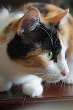 A Curious Calico Cat Journal