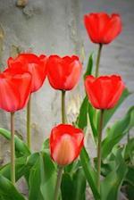 Tulips Notebook