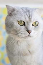 Beautiful White Scottish Fold Cat Journal