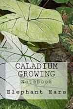 Caladium Growing