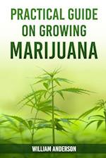 Practical Guide on Growing Marijuana