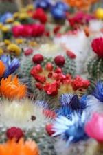 Flowering Cactus Notebook
