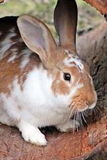 Too Cute Brown and White Domestic Rabbit Journal