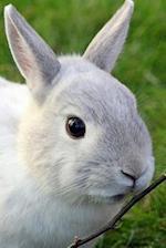 Dwarf Rabbit Notebook