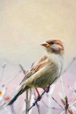 A Sparrow in Springtime - Blank Notebook