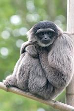 Gibbon Notebook
