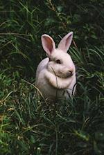 Bunny Rabbit Sitting in the Grass