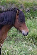 Bay Horse in Iceland Journal