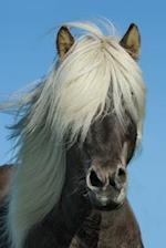 Pony in Iceland Journal