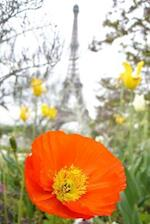 An Orange Poppy and the Eiffel Tower Journal