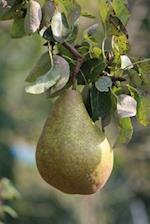 A Pear on a Pear Tree Journal