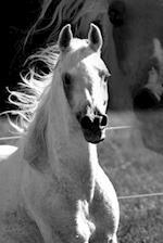 Beautiful Stallion Horse Journal