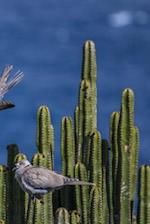 Pigeons on Cactus Notebook