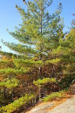 Journal Evergreen Mountain Ledge