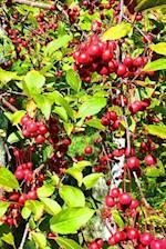 Journal Tree Green Leaves Red Berries