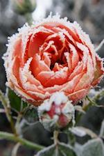 Frost on the Rose Journal