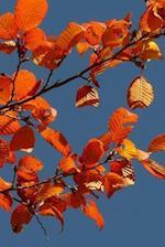 Autumn Forest Notebook