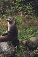 Cute Otter on a Boulder