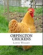 Orpington Chickens