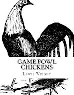 Game Fowl Chickens