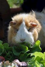 Brown and White Guinea Pig Enjoying a Salad Journal