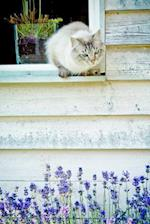 Cat in a Cottage Window Journal