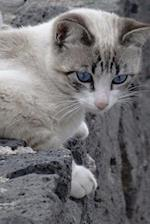 Blue-Eyed Cat on a Wall Journal