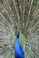 Peacock and Its Perfect Plumage Notebook