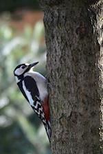 Great Spotted Woodpecker Notebook