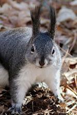 Frightened Squirrel Notebook
