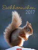 Eichhörnchen - Squirrels