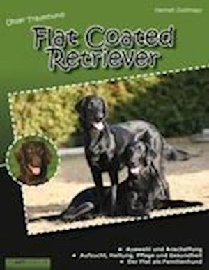 Unser Traumhund: Flat Coated Retriever
