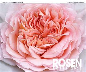 Rosen 2020