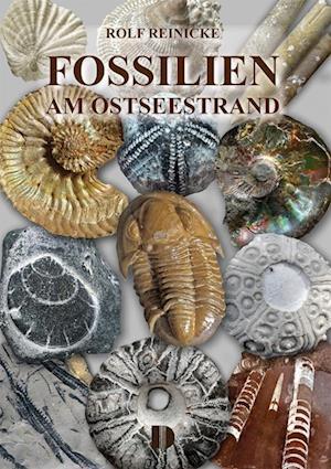 Fossilien am Ostseestrand