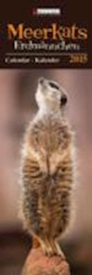 Meerkats 2015